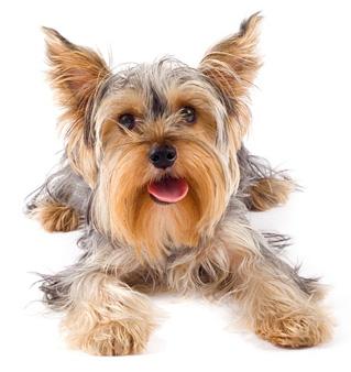 dog-image1